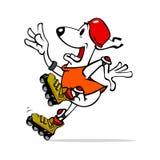 Dog on roller skates Stock Image