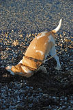 Dog rolling on the beach Stock Images