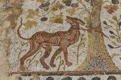 Dog on the roman mosaic Royalty Free Stock Photos