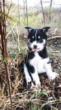 Dog from Romania stock photos