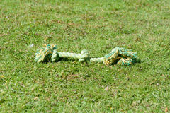 Dog rope tug toy on grass stock photo