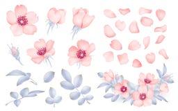 Dog-rose blooms. wild rose vector set. Dog-rose blooms. pink wild rose vector set Royalty Free Stock Images