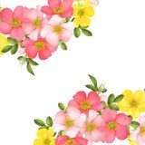 Dog-rose blooms. wild rose vector illustration. Dog-rose blooms. pink and yellow wild rose vector illustration Royalty Free Stock Photography