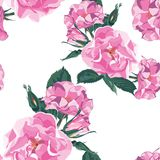 Dog-rose blooms. Wild violet rose vector seamless pattern. Template for textiles, paper, wallpaper. vector illustration
