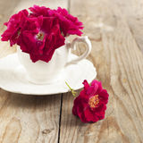 Dog rose flowers in cup Stock Photos