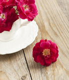 Dog rose flowers in cup Stock Photo
