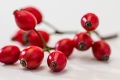 Dog rose fruits / Rosehip Stock Photos