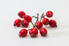 Dog rose fruits / Rosehip Stock Photos