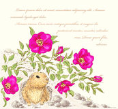 Dog rose and gopher Stock Photo