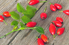 Dog rose hips Royalty Free Stock Images