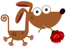 Dog with rose Stock Images