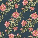 Dog rose seamless pattern Stock Photos