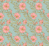 Dog rose seamless pattern Stock Photography