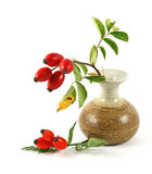 Dog rose in vase Stock Image