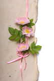 Dog roses on aged paper Royalty Free Stock Photos