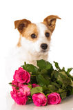Dog with roses Stock Photos