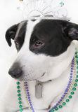 Dog Royalty Royalty Free Stock Images