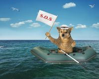 Dog in the rubber boat on the sea royalty free stock photography