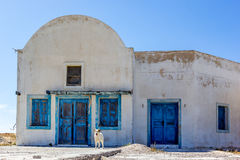 Dog and ruin, Thirasia, Greece Stock Photography