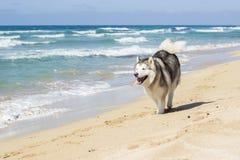 Dog run beach Royalty Free Stock Photos
