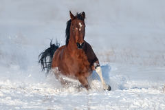 Dog run gallop in snow Royalty Free Stock Photo