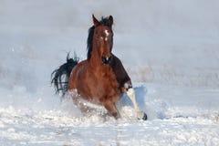 Dog run gallop in snow
