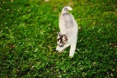 The dog. Stock Photos