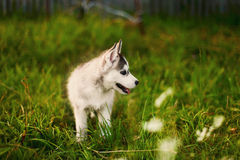The dog. Royalty Free Stock Images