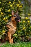 Dog run in park Stock Photo