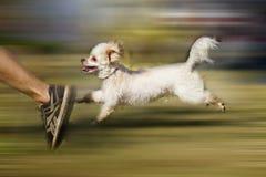 Dog run Stock Photography