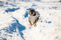 Dog run Royalty Free Stock Photography