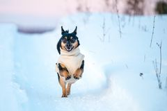 Dog run in winter. Snowy path royalty free stock photography