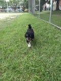 dog running royaltyfri fotografi