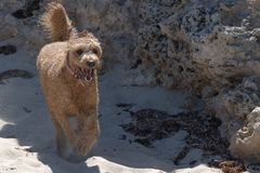 dog running arkivfoto