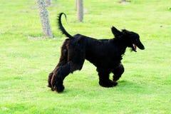 Dog running Stock Photos