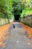 A dog running along a walled pathway in autumn Royalty Free Stock Image