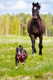 Dog running away from a horse Royalty Free Stock Images