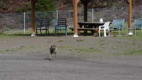 Dog running away from outside bench at dog park. Dog running alone with happiness in dog park on sunny day stock video