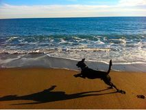 Dog running on beach. Black dog running on beach. paw prints in sand and shadow. beautiful ocean shore Stock Images