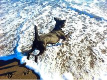 Dog running on beach Stock Photo