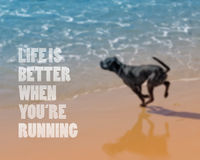 Dog running on the beach. Blurred background Royalty Free Stock Image