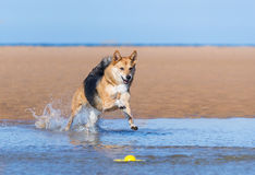 Dog running Stock Photo