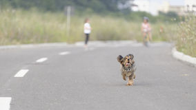 Dog running down a paved highway Stock Image