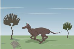 Dog running, color, vector. Dog running on the field, color, vector, outdoors Stock Photos
