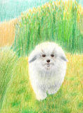 Dog running on the grass in the field against the sun. Colored pencils Royalty Free Stock Photos