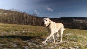 Dog running on meadow