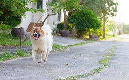 Dog running. Notion dog running flow in the air Royalty Free Stock Photography