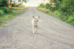 Dog running smile in the way alone Royalty Free Stock Photography