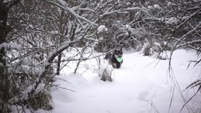 Dog running through snow stock video footage
