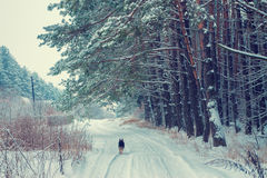 Dog running on the snowy road Royalty Free Stock Photo